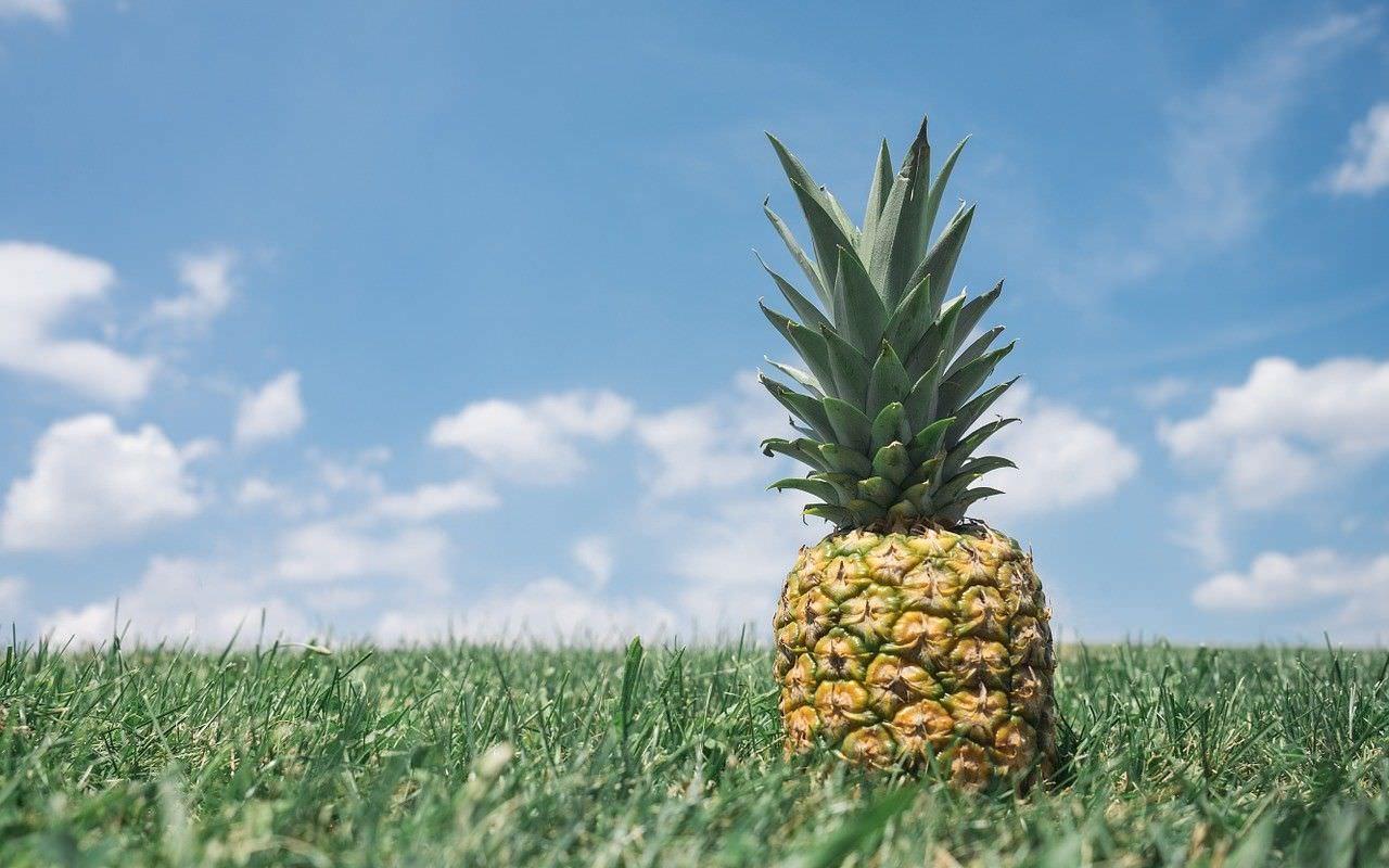 pineapple-867245_1280-e1440058101453-compressor