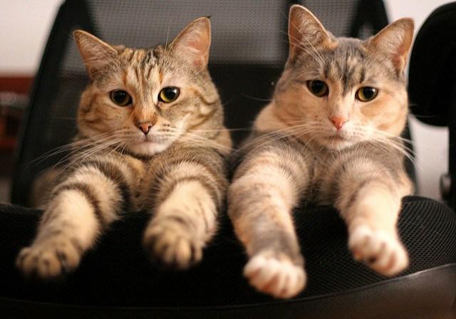02-sister-cats-525309776_455b71d1f2_z